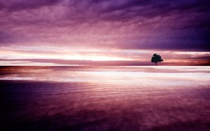 Purple Nature Wallpaper