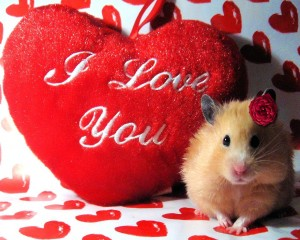 Valentine Day Hindi SMS 2013