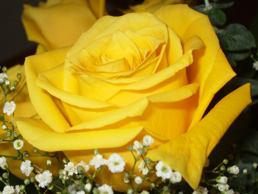 happy yellow rose day