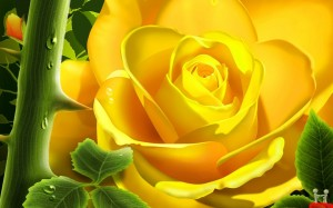 happy yellow rose day 2013 hd wallpapers