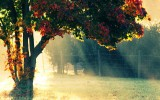 Autumn Morning Wallpapers HD