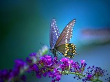 Butterfly Wallpaper HD 1024x768