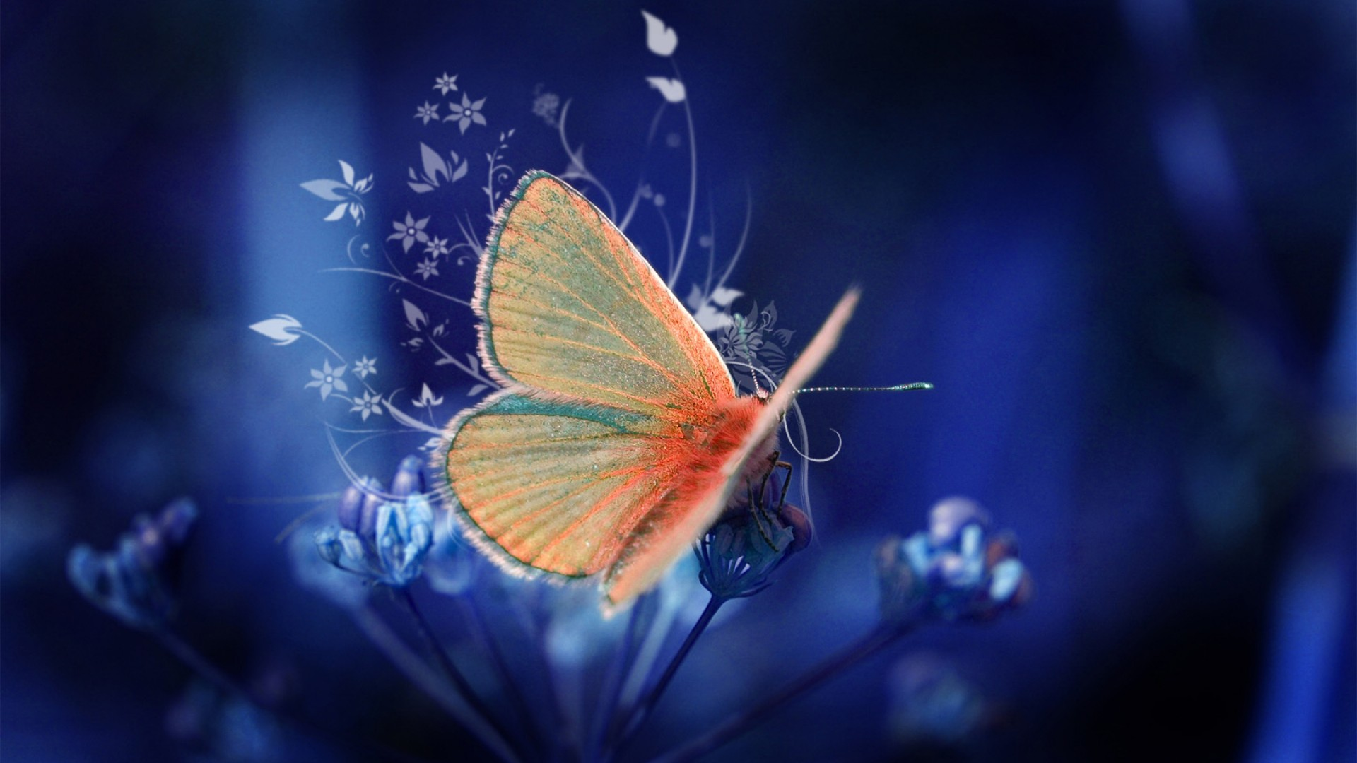File Name : Butterfly Wallpaper HD 1920×1080