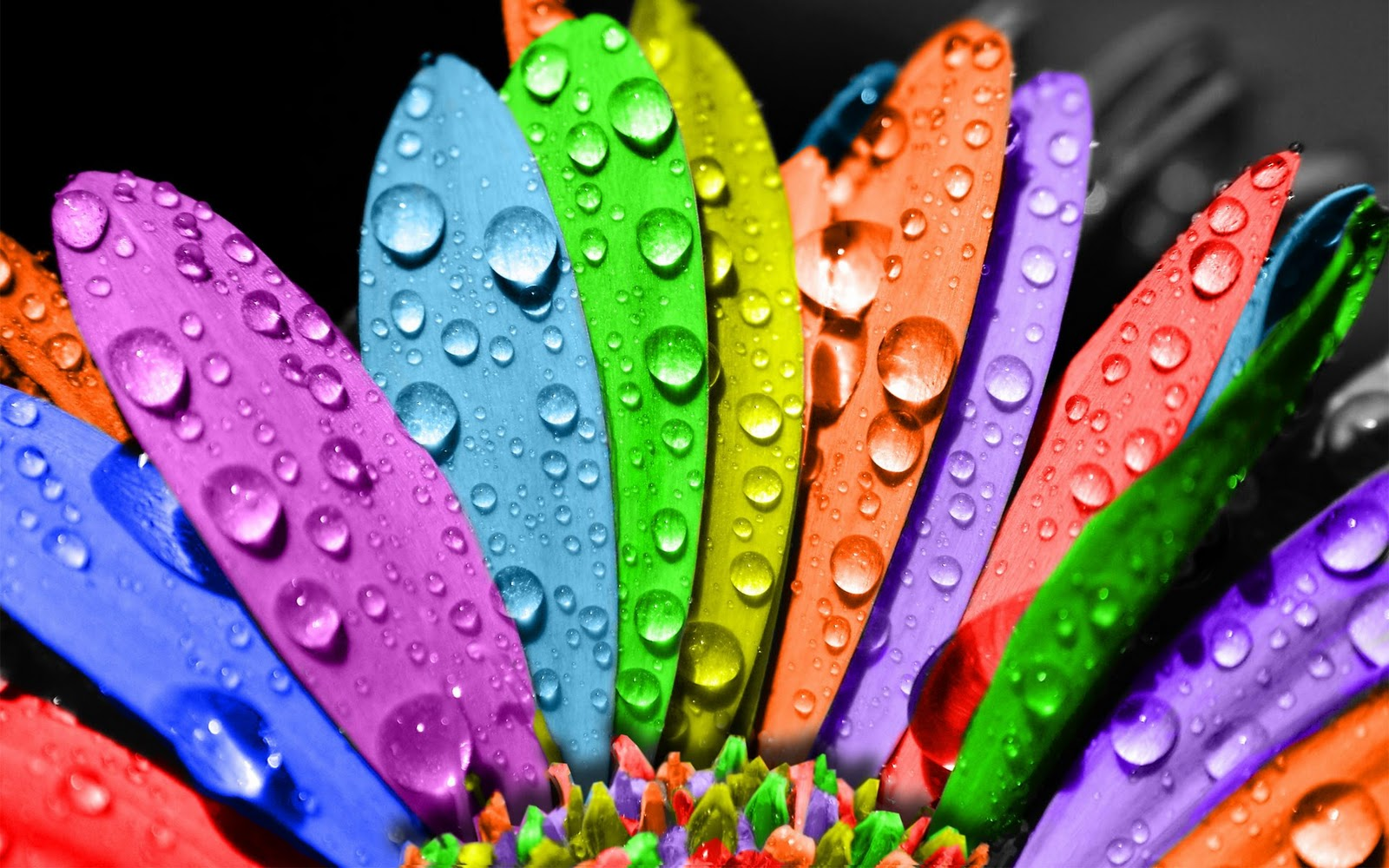 Cool Colorful Wallpaper Backgrounds: 40+ Most Beautiful And Cool Backgrounds For Your Desktop