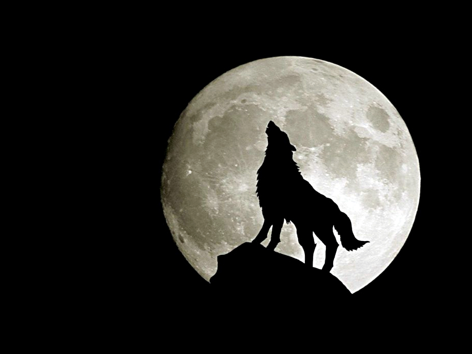 pics photos file name free wolf wallpaper hd widescreen