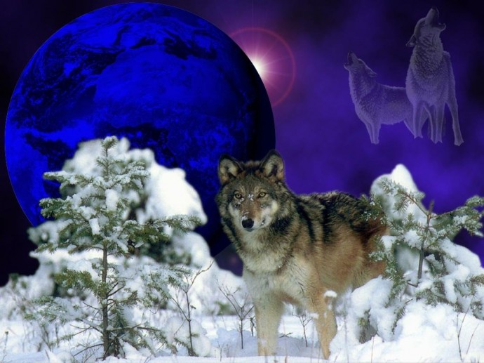 Free Wolf Wallpaper HD Widescreen