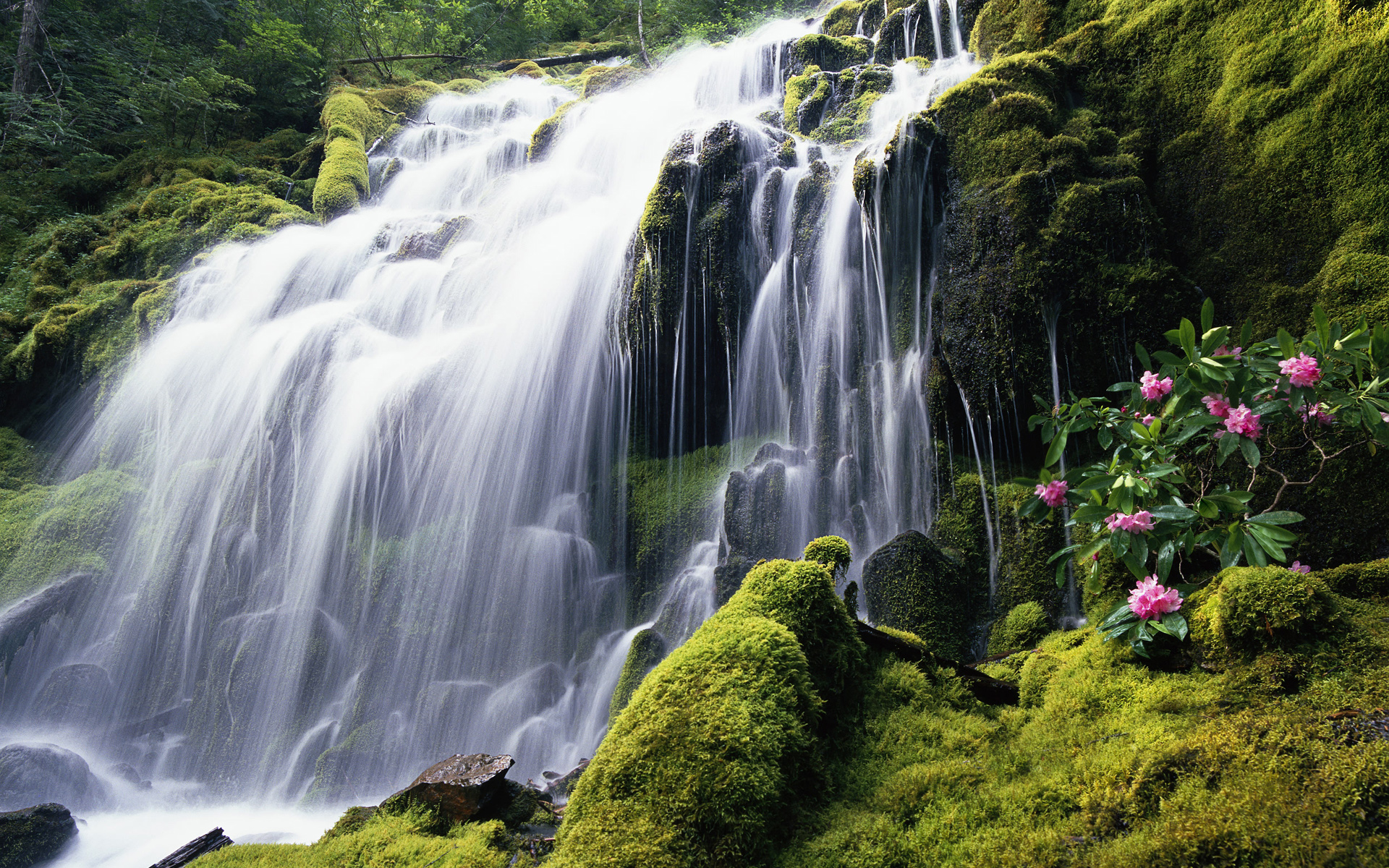 Forest Waterfall HD Wallpaper 1920x1200 | ImageBank.
