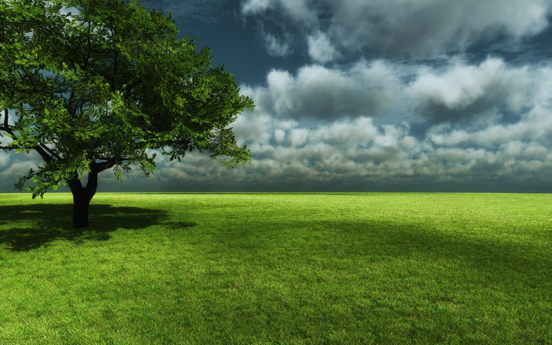 3d tree and field wallpaper for Tree wallpaper