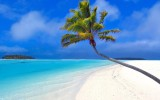 A Palm Tree On Beach HD Wallpaper