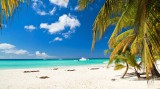 A Palm Tree On Beach Wallpaper 1366x768