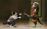 Cats Fighting Kung Fu HD Wallpaper