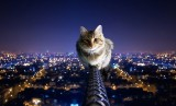 Cats Funny Night Wallpaper HD 1920x1200