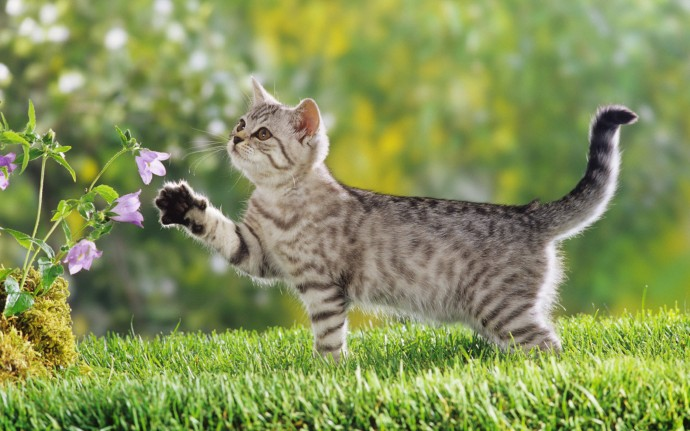 Cute Cat Wallpaper Download