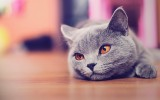 Cute Cat Wallpaper HD