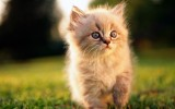 Cute Cat Wallpaper HD 1920x1200