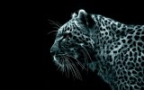 Free Leopard Wallpaper HD