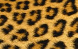Leopard Skin Wallpaper Iphone