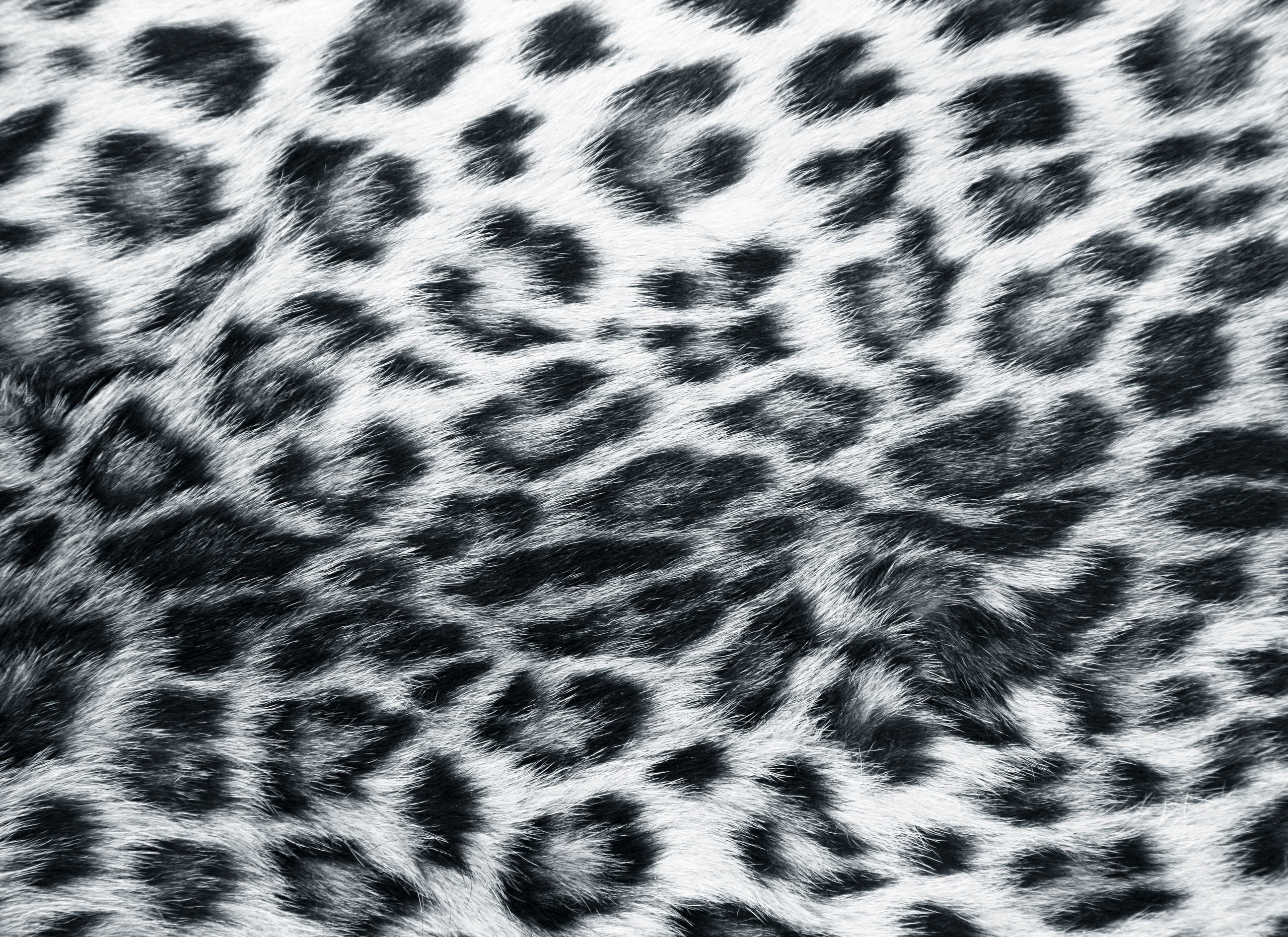 leopard and red wallpaper - photo #49