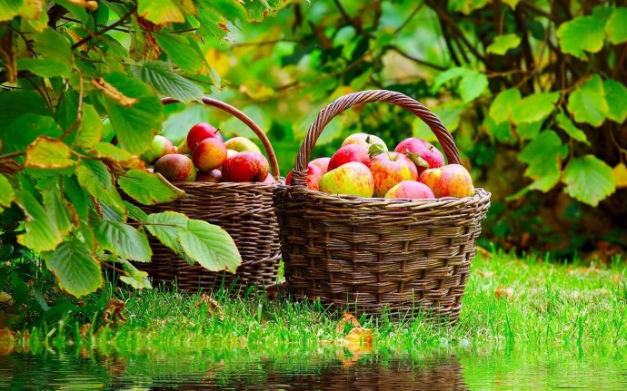 Nature Fruits Wallpaper
