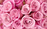 Special Pink Roses Wallpaper Desktop