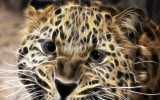 The Snow Leopard Wallpaper For Ipad