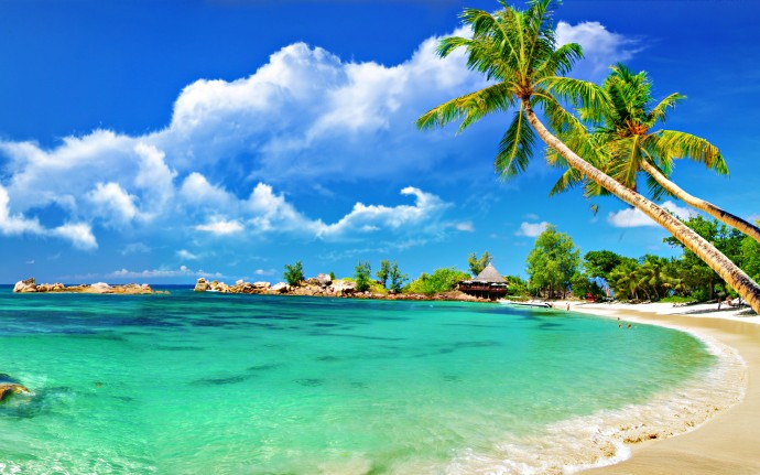 Tropical-Palm-Beach-Wallpaper-2560x1600