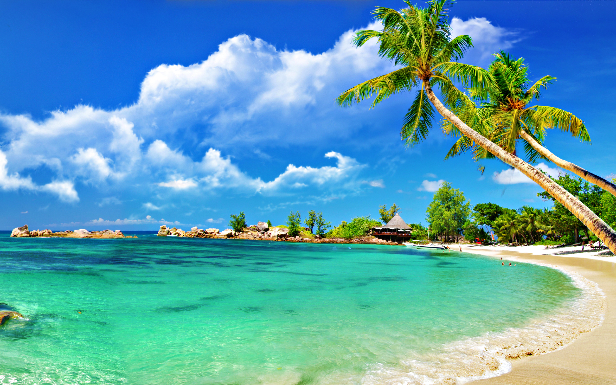 Tropical Palm Beach Wallpaper 2560x1600  ImageBank.biz