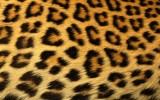 New Leopard Wallpaper Print