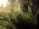 Download Rain Wallpapers
