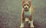 Cat in Glasses Wallpapers