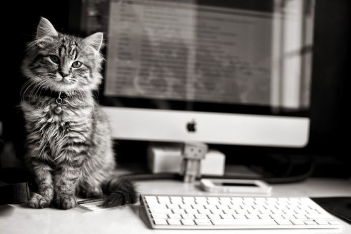 Kitten with Apple Wallpapers