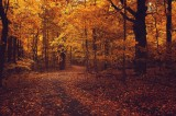 Nature Autumn Wallpapers