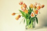 Tulips Vase Wallpapers