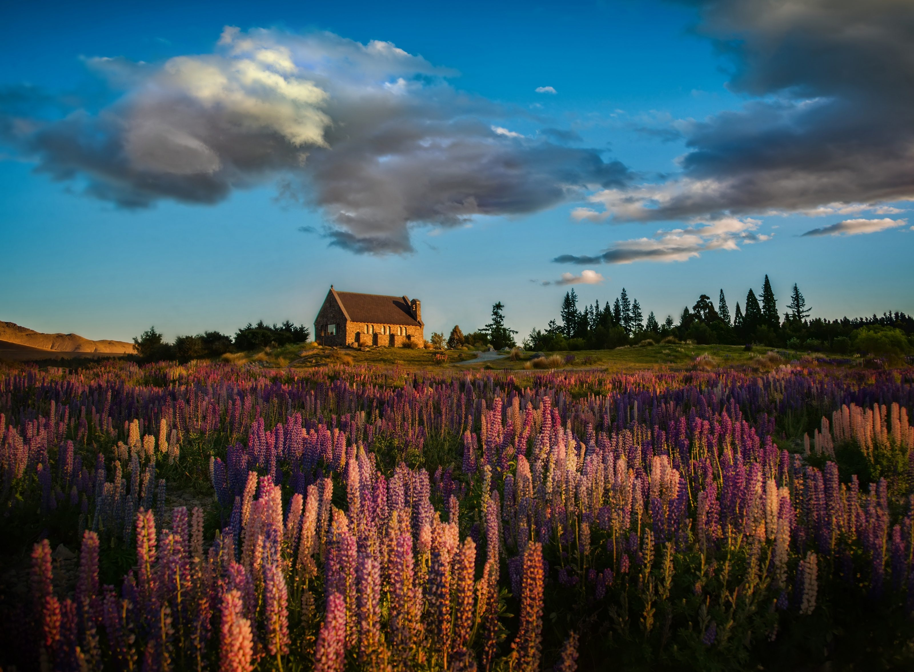 High quality wallpaper of lupine flowers desktop for Quality wallpaper for home