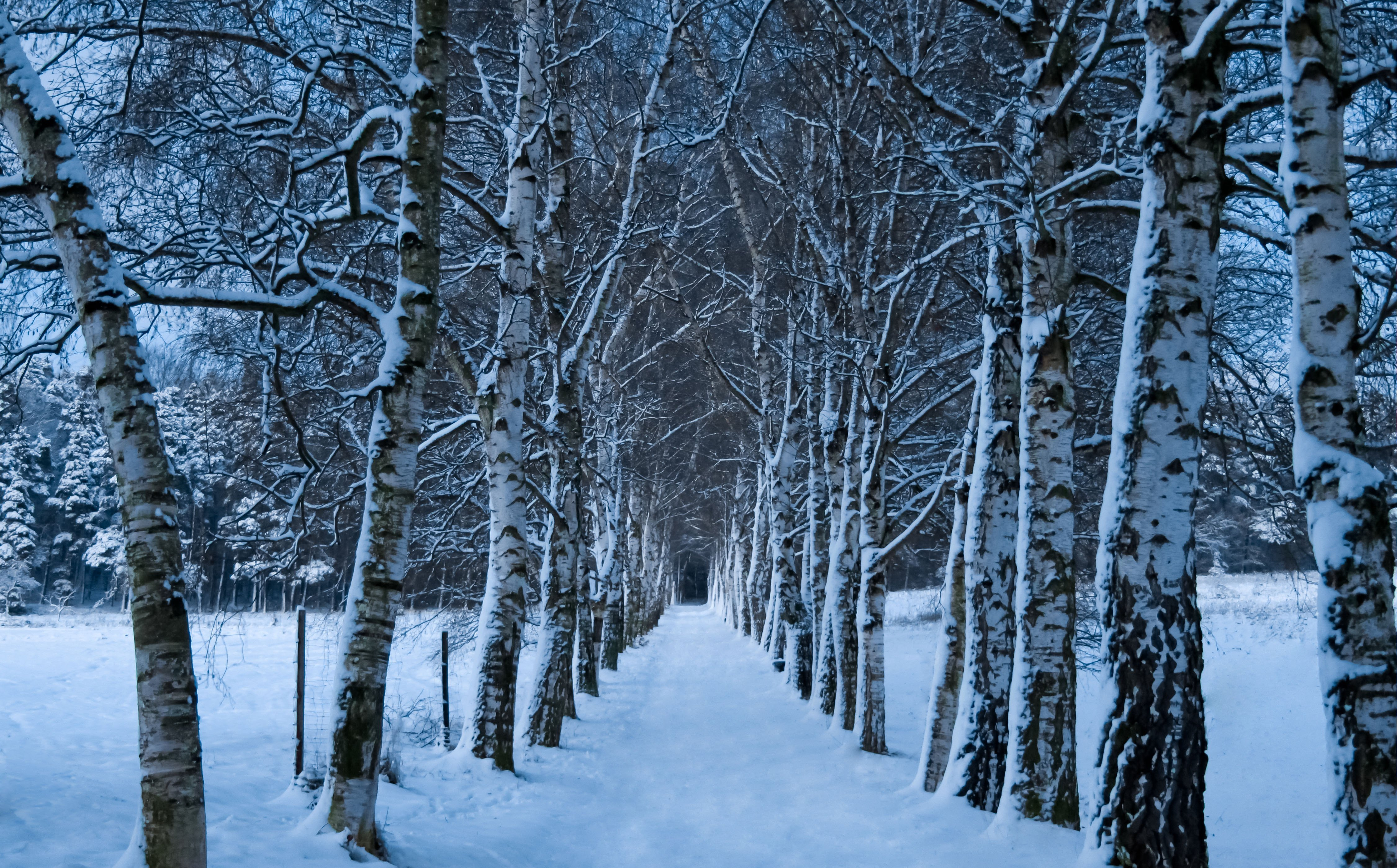 High Resolution Wallpaper Winter: High Resolution Wallpaper Of Winter, Picture Of Snow