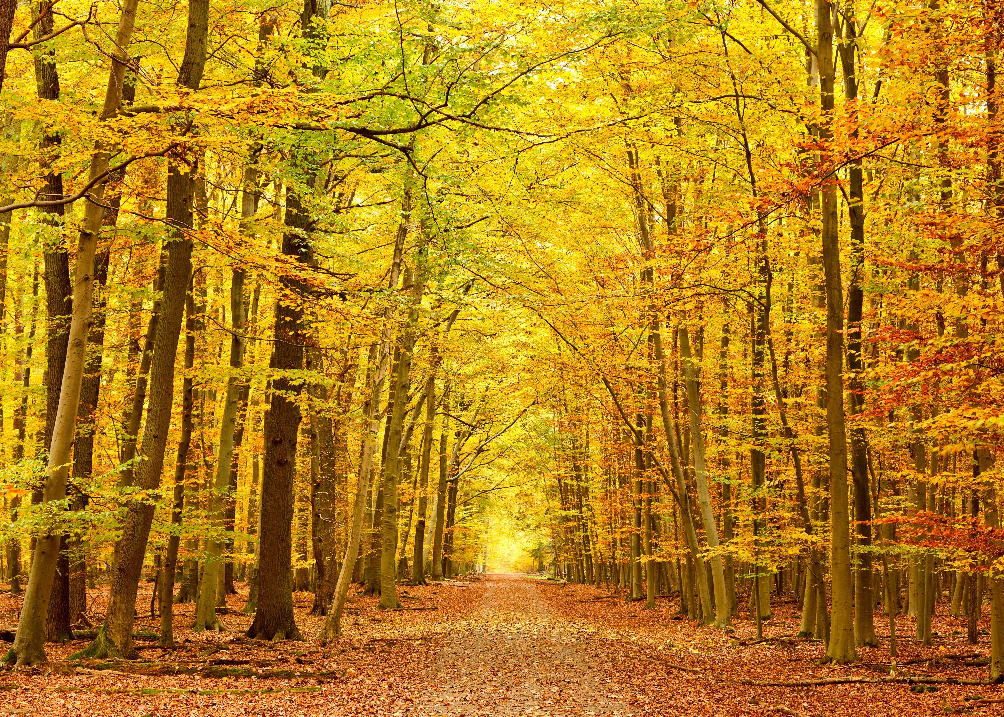 High Definition Photo Of Forest Picture Of Trees Autumn