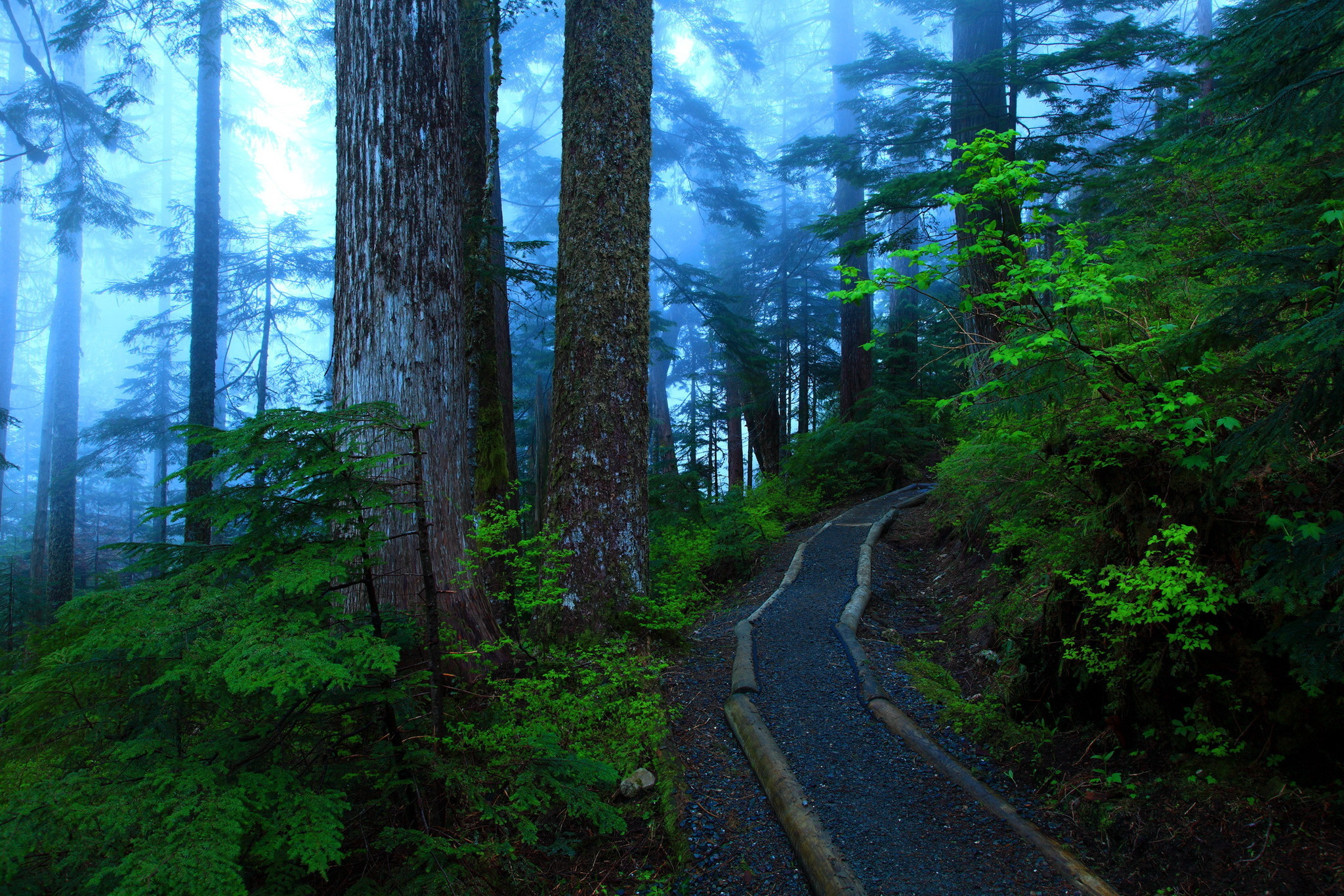high resolution image of forest wallpaper of trail trees